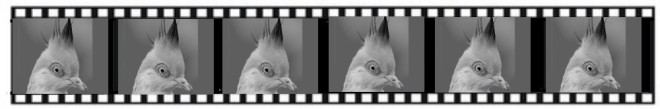 filmstrip pigeon