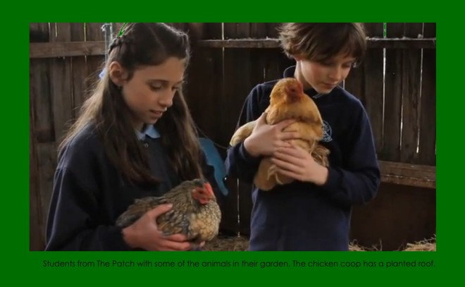 Students from the Patch with chickens